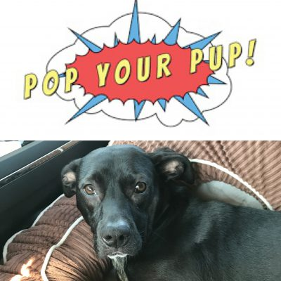 the ultimate gift for dog lovers, featuring Pop Your Pup!