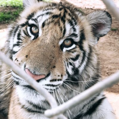 Should I Support A Wild Animal Sanctuary?